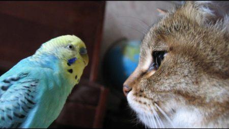 домашний питомец попугай