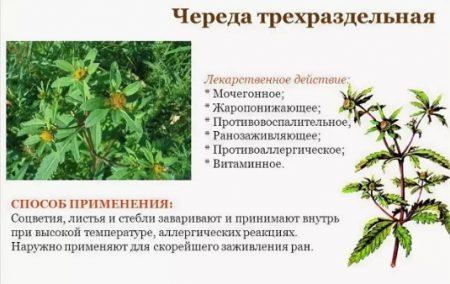 трава череда