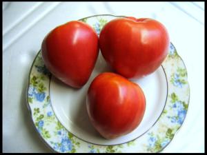 tomat-mazarini-otzyvy-kto-sazhal